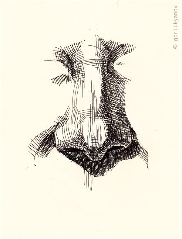 Drawn pen nose  drawing drawing human hatching