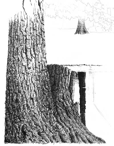Drawn pen realistic drawing  (stumps Trees and art