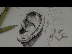 Drawn pen realistic drawing  animal Pen YouTube to