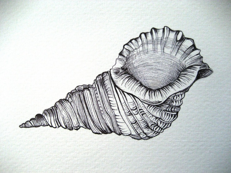 Drawn pen shell The best on Search drawings