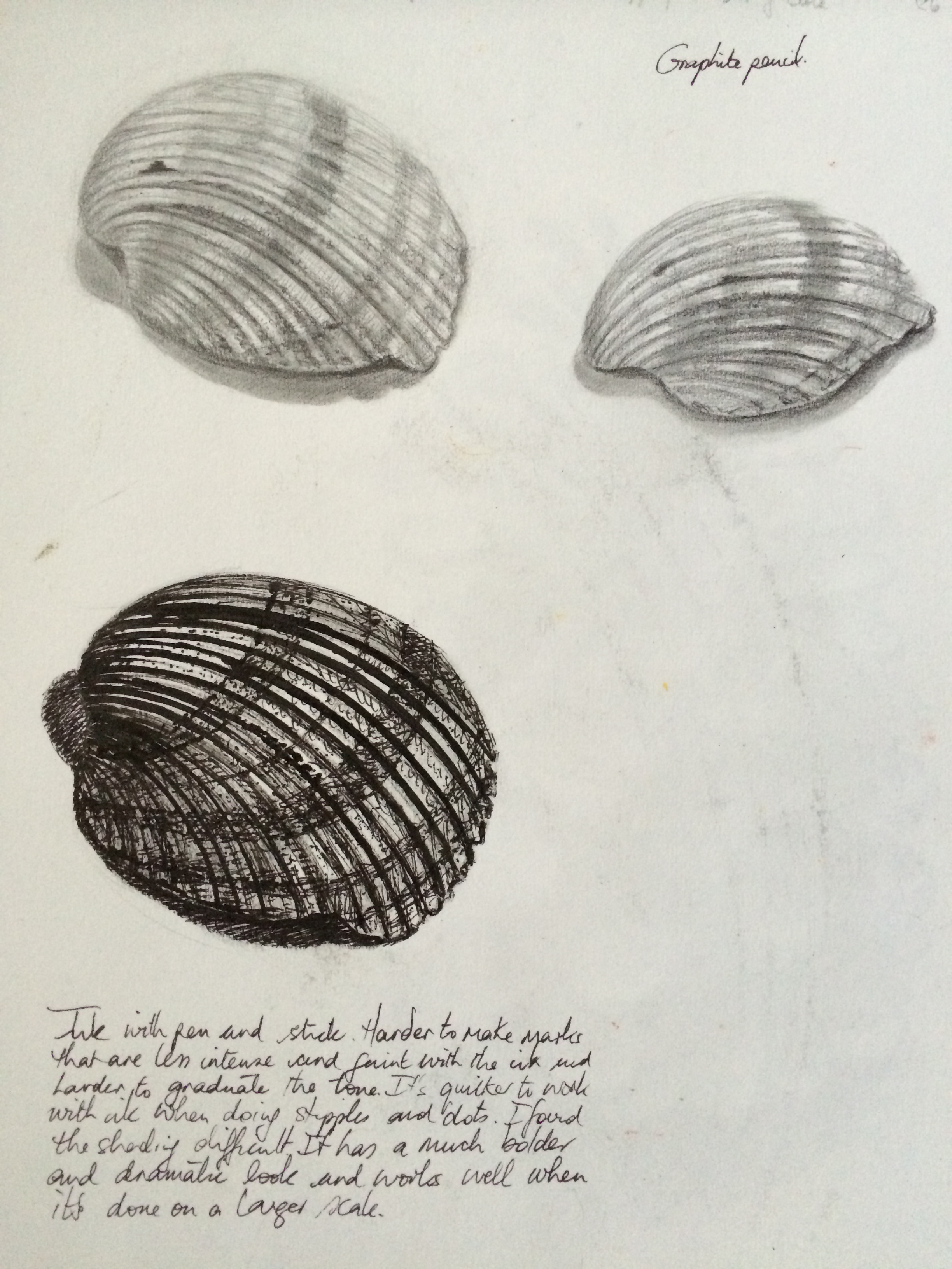 Drawn shell pen drawing Pencil graphite black and with