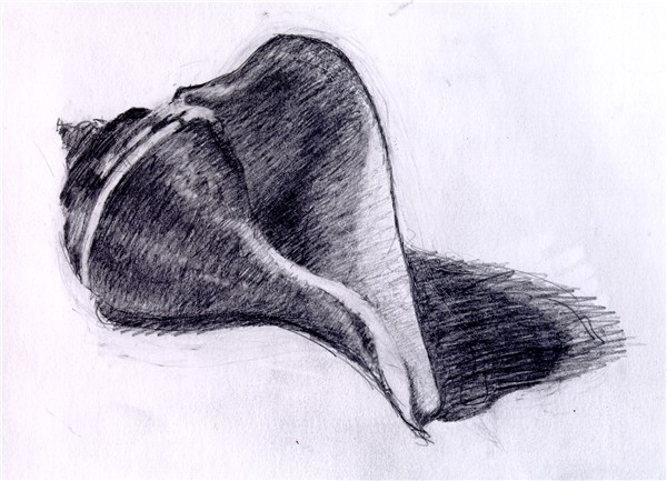 Drawn pen shell To pencil sea shell chris