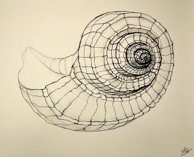 Drawn shell artist Guide Art of contour shell