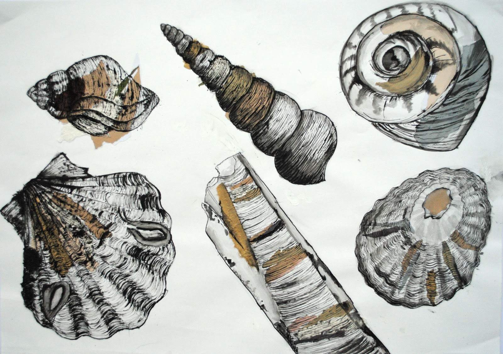 Drawn pen shell Using and shells drawings 1068693634
