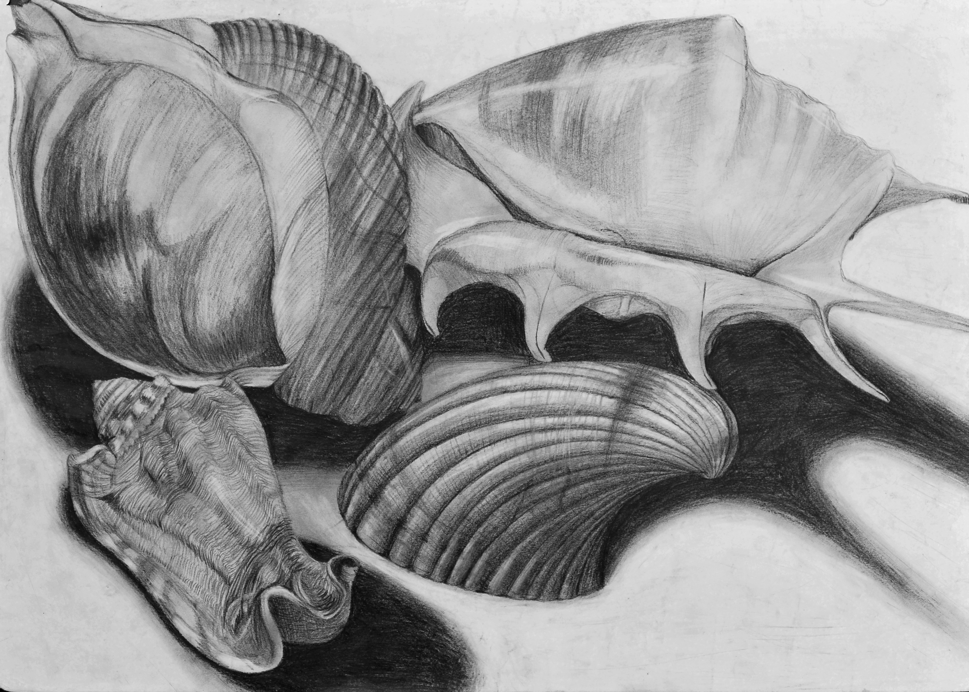 Drawn shell shaded Shells Shells Tes Lessons Life: