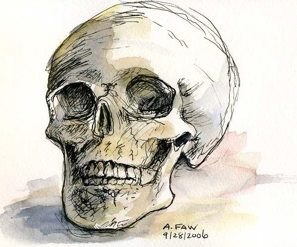 Drawn pen skull Pinterest images and Ink Pen