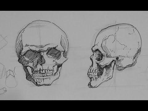 Drawn pen skull Skull how in Drawing draw