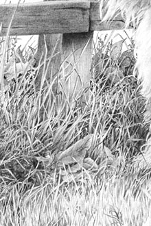 Drawn pen space DRAWING GRASS Drawing negative techniques)at