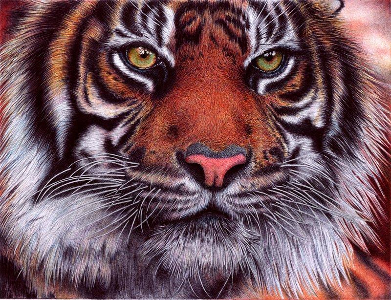 Drawn pen tiger Pen on Ballpoint VianaArts by