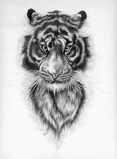 Drawn pen tiger TigersPensTattoos 26a6d9f73f13c710540174183cfcb741 Tigers (500×676) Tiger