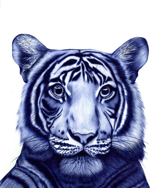 Drawn pen tiger With pen Tiger ball drawn