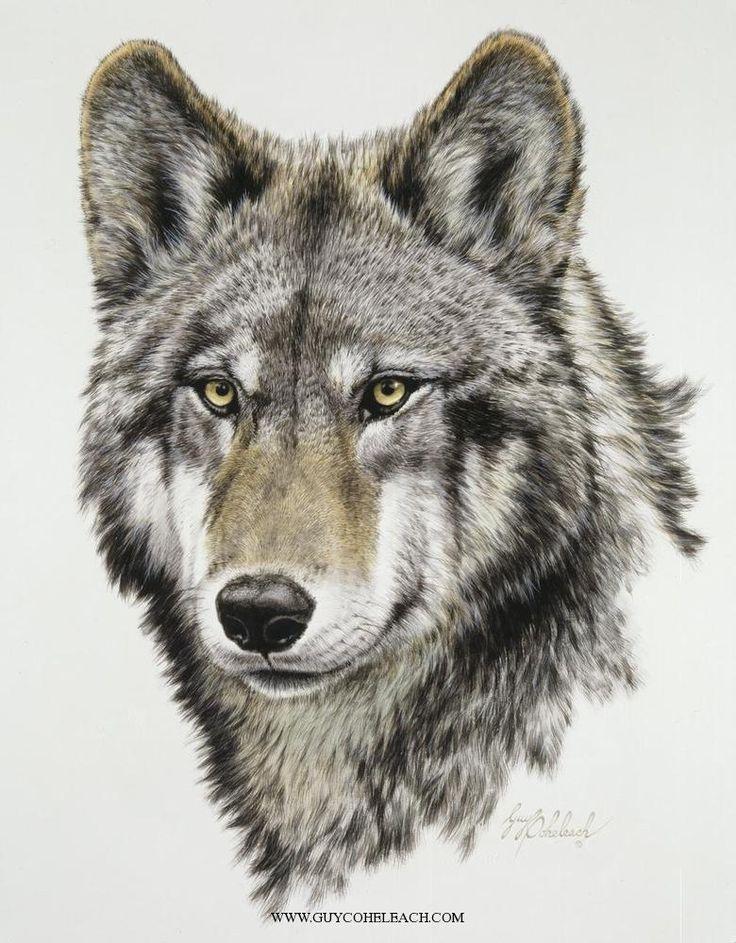 Drawn pen wolf Pinterest about Art/Wolves best images