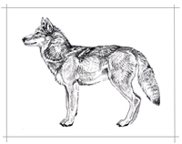 Drawn pen wolf Drawing Pen Pen  and