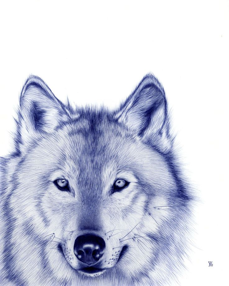 Drawn pen wolf On Pinterest about Drawing best