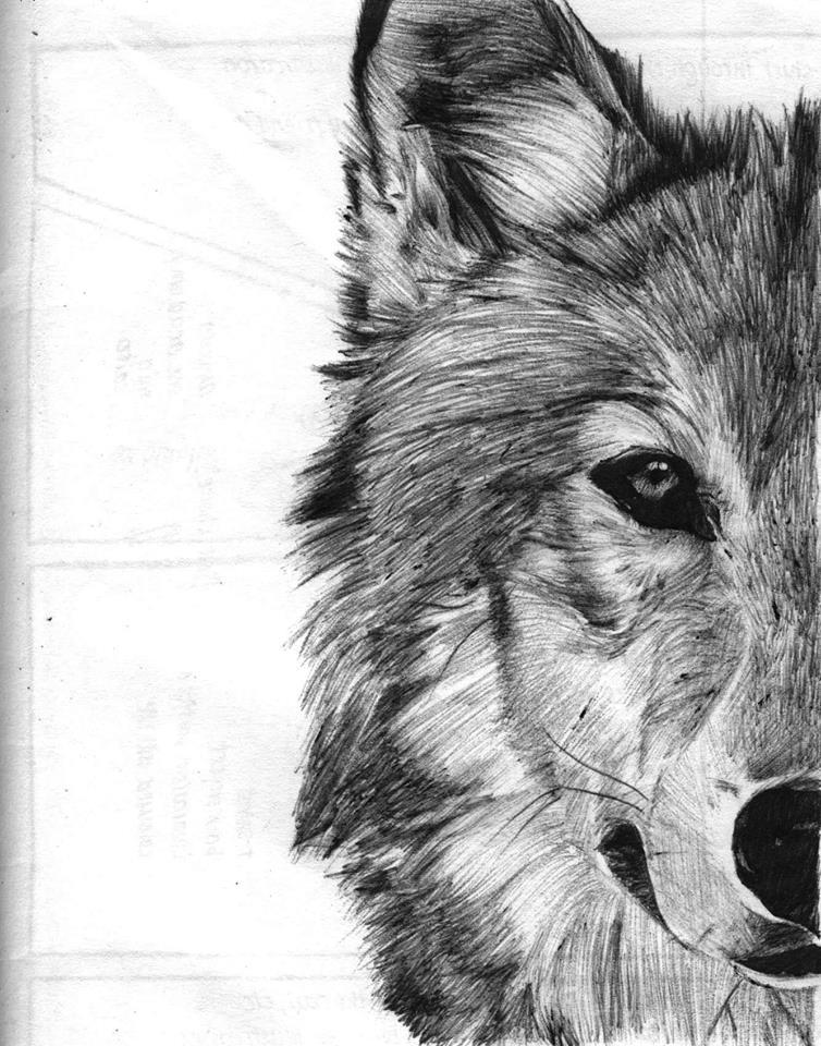 Drawn pen wolf Wolf in by Moleskine Ballpoint