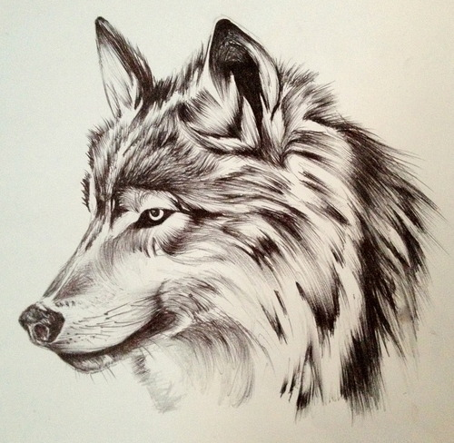 Drawn pen wolf Art Pinterest and ink this!