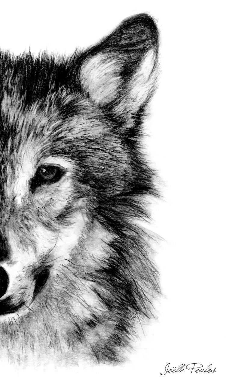 Drawn werewolf artwork Drawing Pencil Art Wolf Art