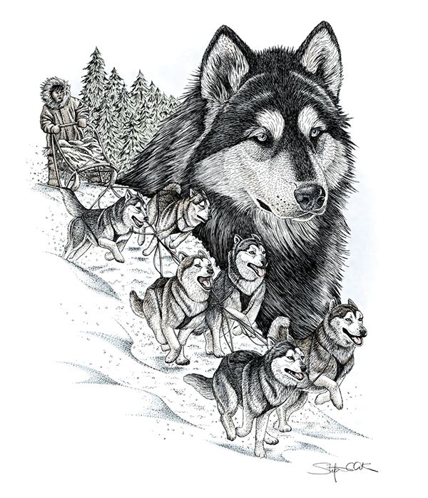 Drawn pen wolf And 5180 images best on