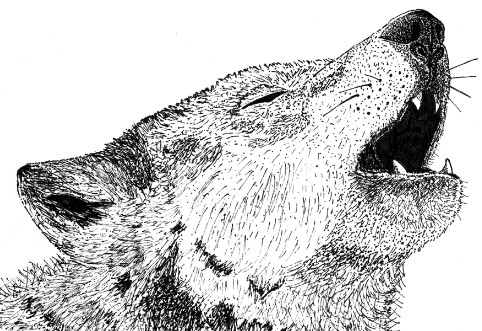 Drawn pen wolf Years a The wolf Blog