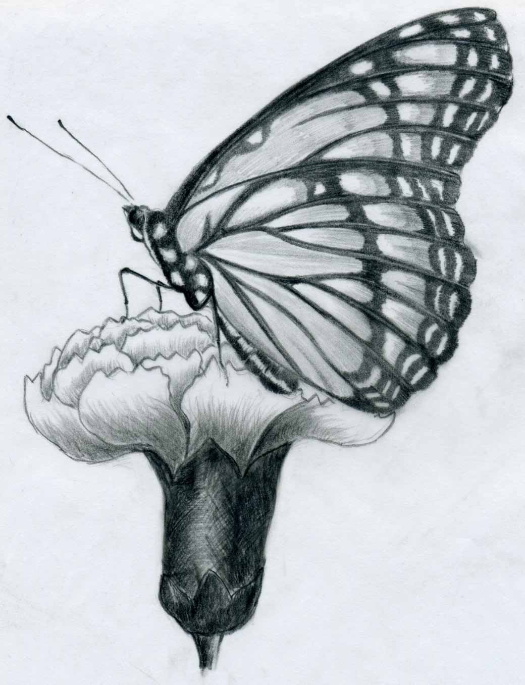 Drawn butterfly but beautiful Images in Free Free pencil