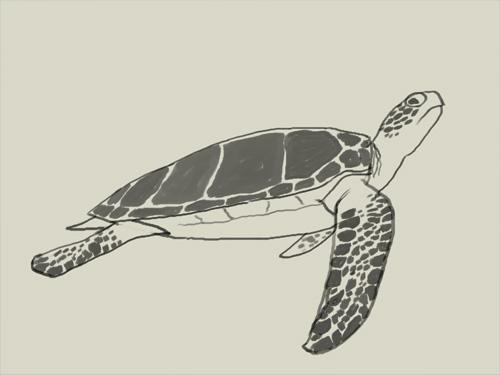 Drawn pencil turtle Draw How Taptara green Xia