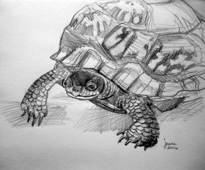 Drawn pencil turtle Nails I just found know