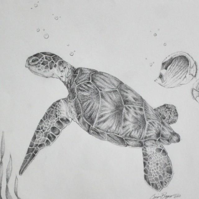 Drawn pencil turtle Instagram #oceanart #artwork by #artist