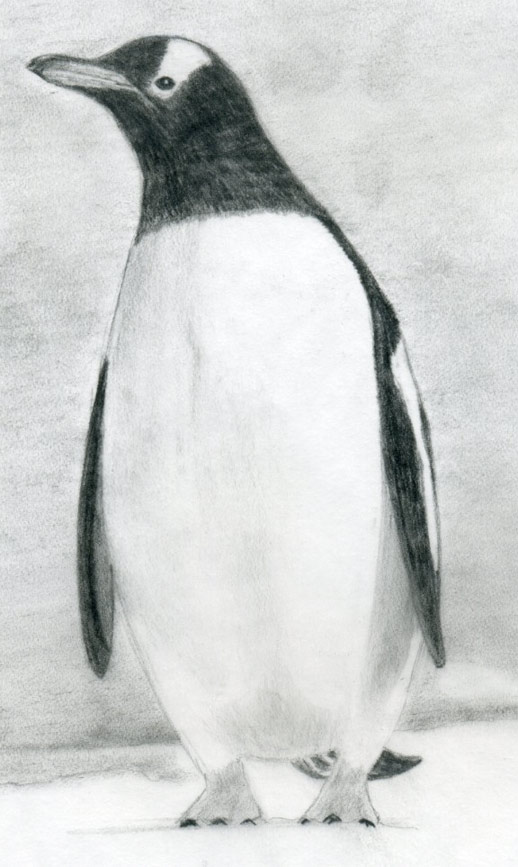 Drawn penguin  Draw A To How