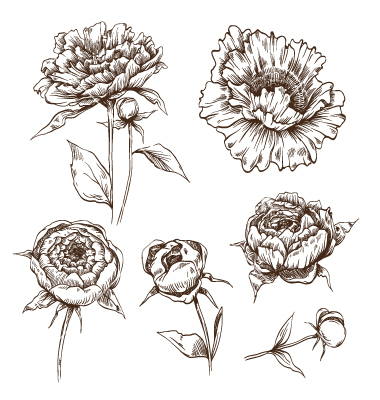 Drawn peony simple Hand+drawn+peony+flowers+set+vector+1446039+  + +by+Roman84 Hand+drawn+peony+flowers+set+vector+1446039+