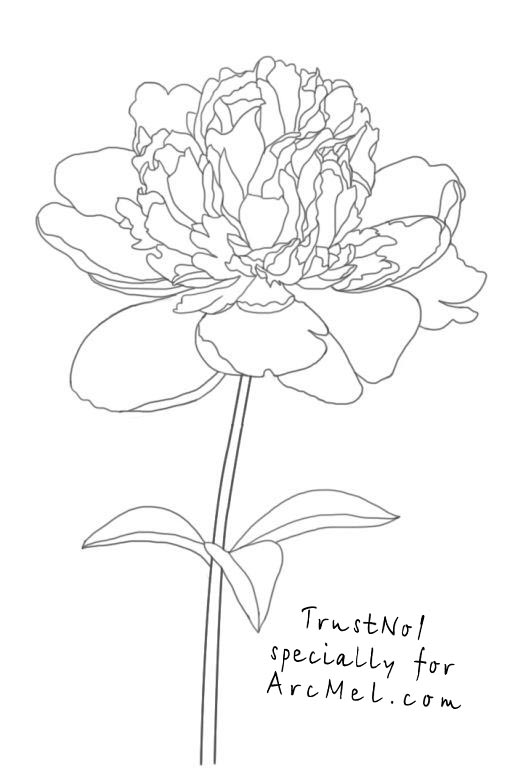 Drawn peony simple Draw step 5 to step