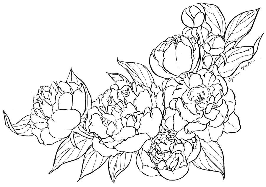 Drawn peony abstract Peony Tattoo Peony Lineart Drawing