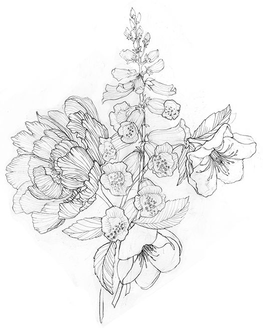 Drawn peony Housley Stephanie ideas on 25+
