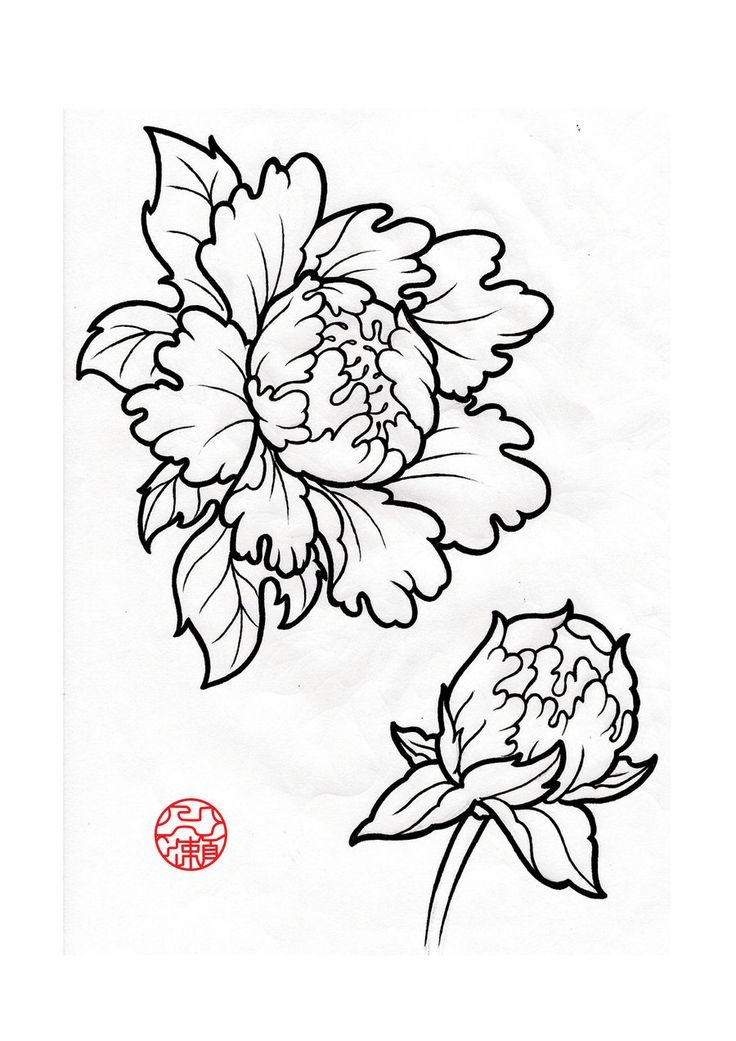 Drawn peony hand drawn Drawing for result Peony Image