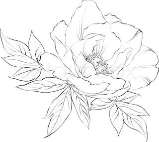 Drawn peony hand drawn Coloring Line Flower Best Peony