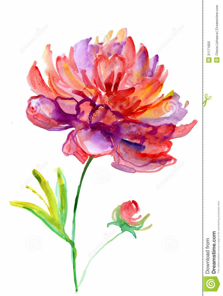 Drawn peony Peony images watercolor about (