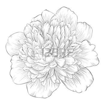 Drawn peony Flowers: 61 drawn abstract about
