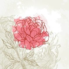 Drawn peony Vector com img Stock unique