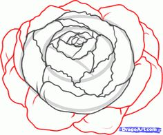 Drawn peony base Flowers line Search peonies drawing