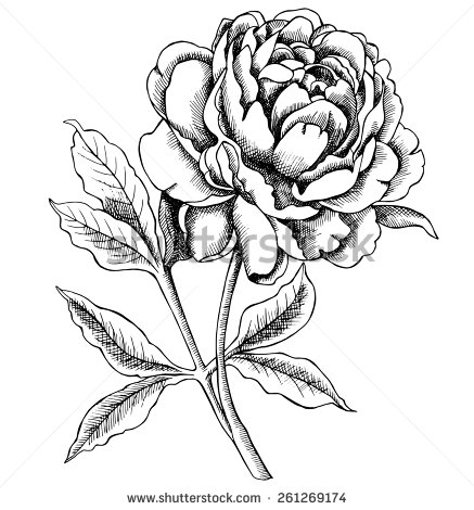 Peony clipart black and white #12