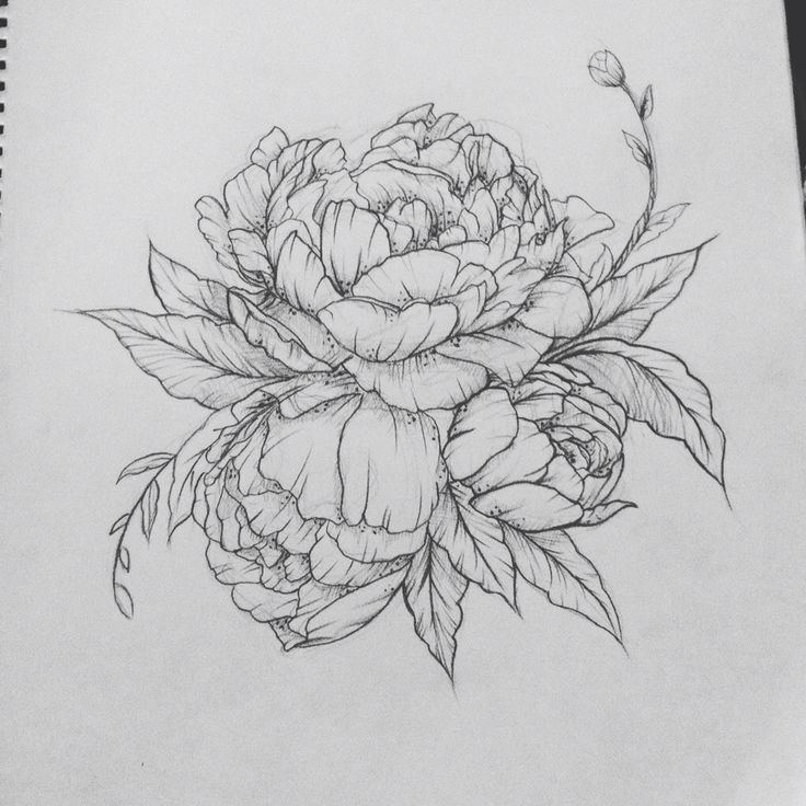 Drawn peony carnation flower TattooSnowflake about TattoosFlower Pinterest Florals