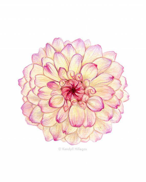 Drawn peony carnation flower // Carnation Floral Pinterest ideas
