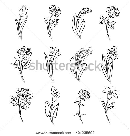 Drawn peony carnation flower Tulip  chamomile of Collection