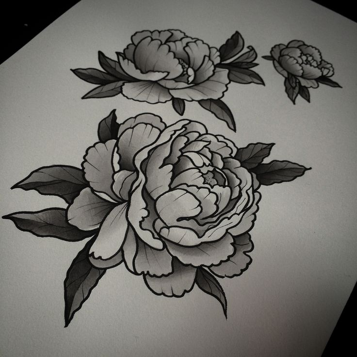 Drawn peony carnation flower A Tatto peony  black