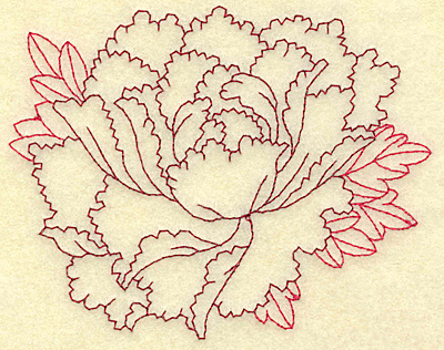 Drawn peony carnation flower Designs and Deer's Education Designs