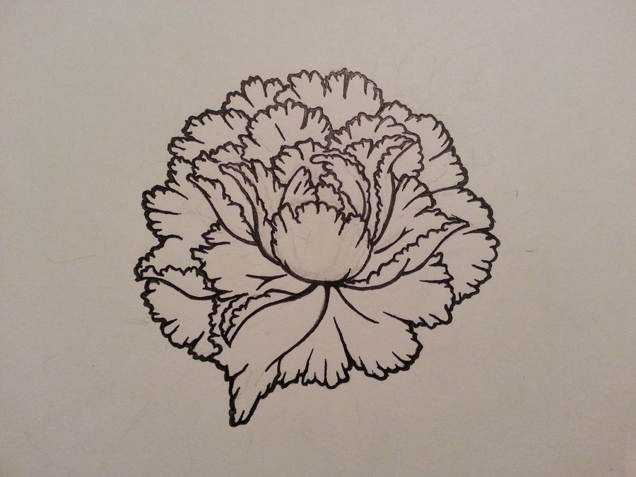 Drawn peony carnation flower Lush bloom full Peony full