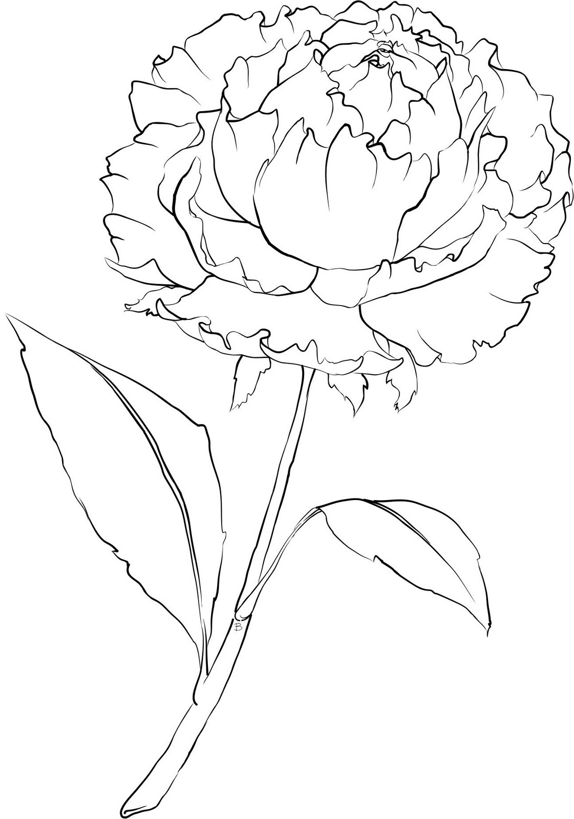 Drawn peony carnation flower Coloring Template/Stencil/ Beccy's  page