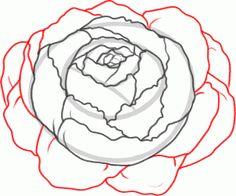 Drawn peony cartoon A peony Flowers Draw step