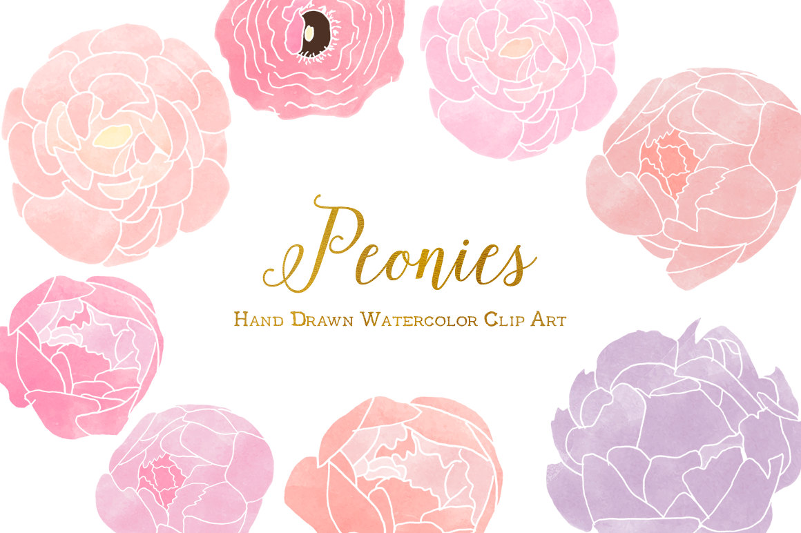 Ranuncula clipart hand drawn flower Hand this Peonies Art Personal
