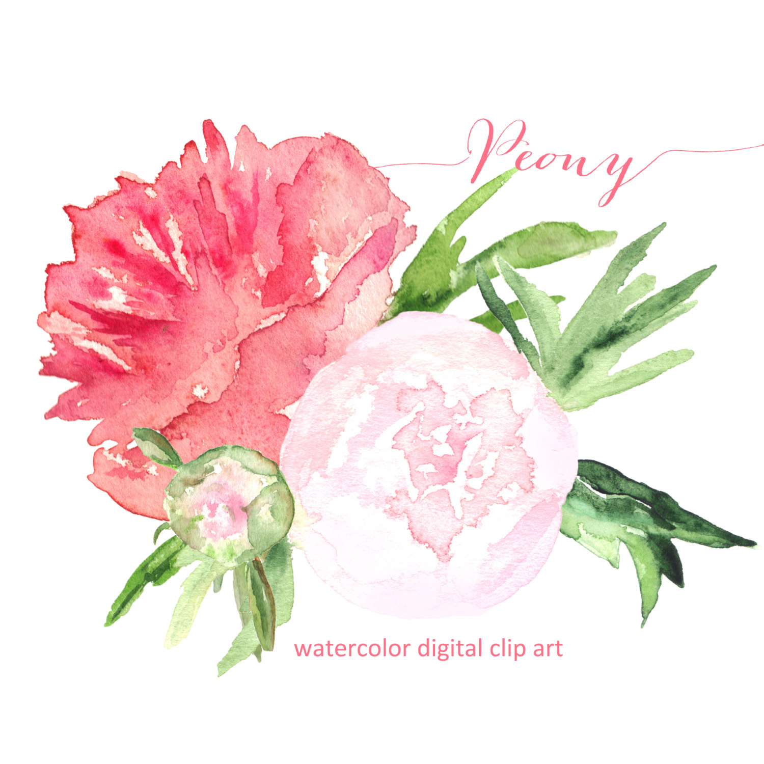 Drawn peony clip art This SALES! bouquet file is