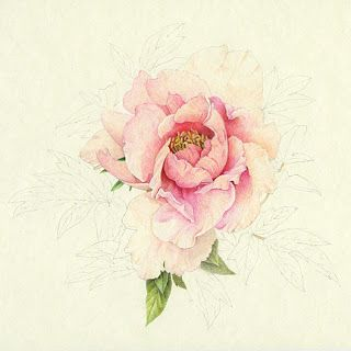 Drawn peony colored Painting more Pin about and